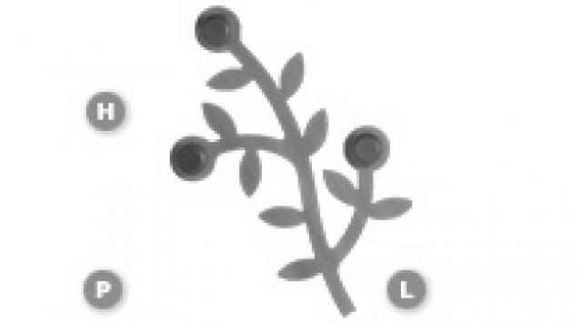 AppendialberoFoppa1 thumb