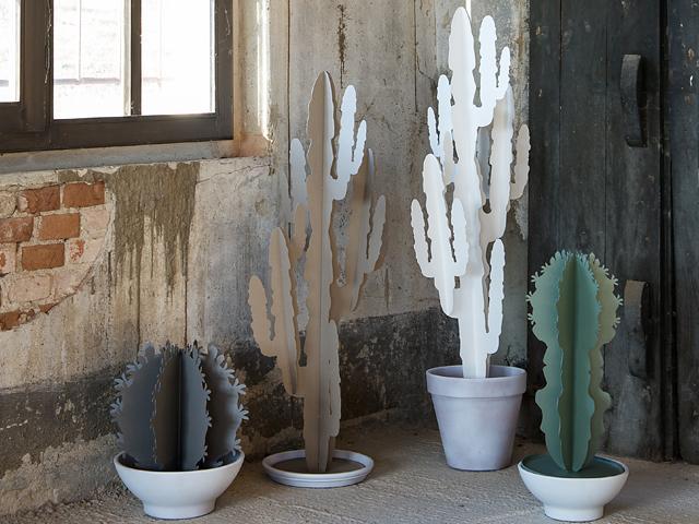 ArtieMestieri cactus a thumb